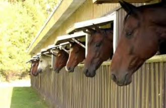 riding-club-facebook-photos-horses-sticking-heads-out-of-stall-windows