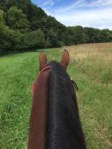 trail-horse